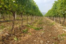 Vinogradi AG Međugorje